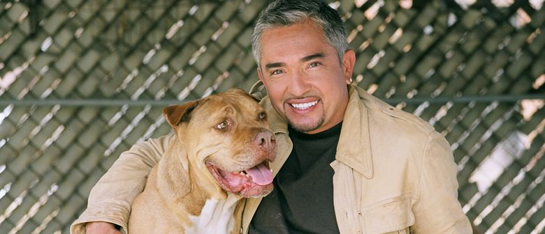 Cesar Millan Singapore Date - Dog Lovers Unite